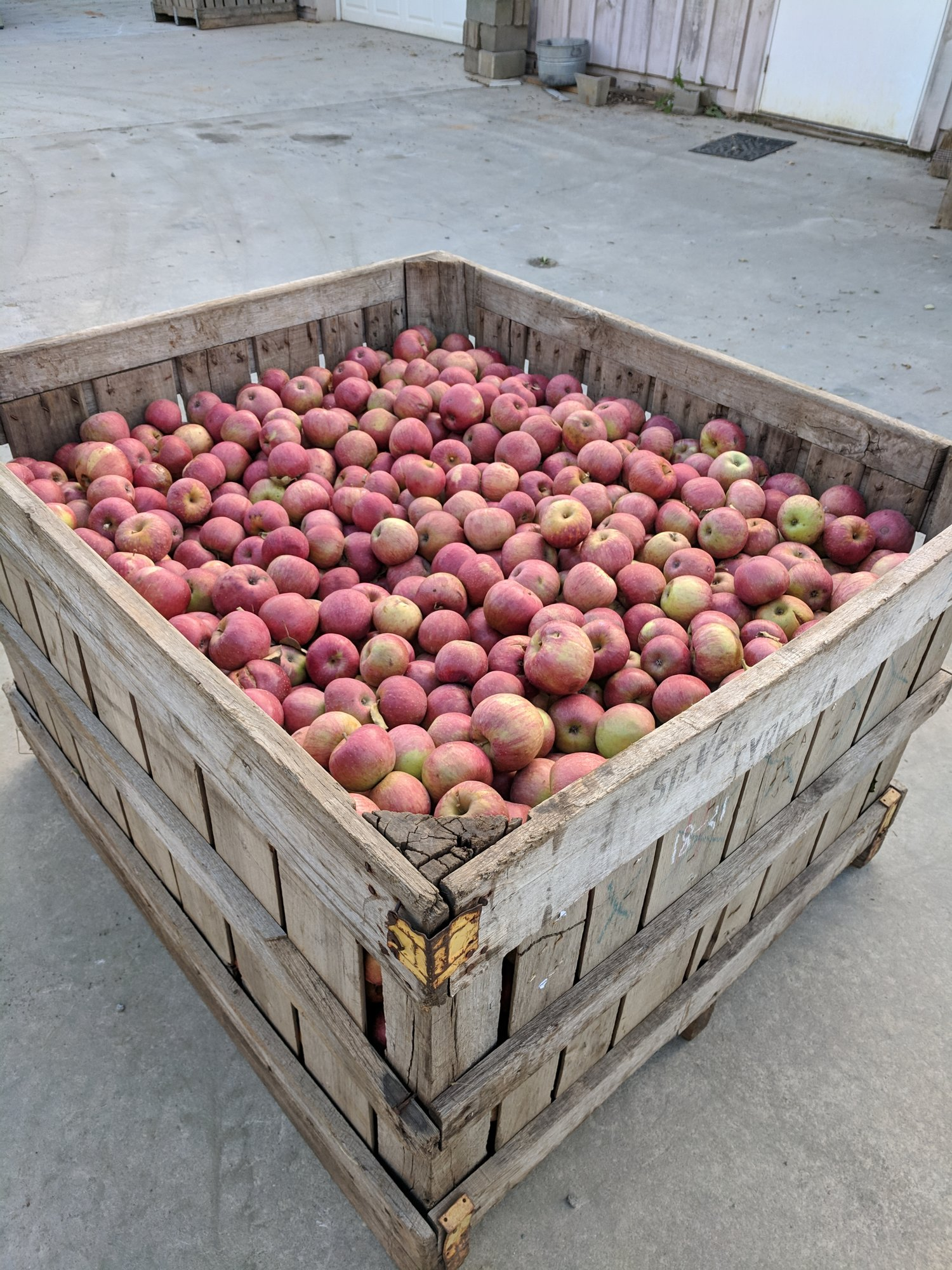 Albemarle Ciderworks – A day on the orchard